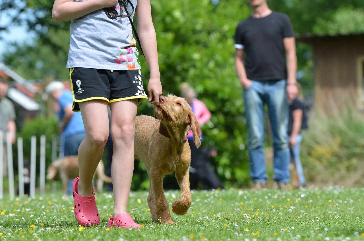 what to look for in a good dog training class