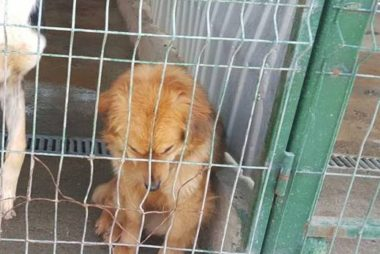 romanian rescue dog Honey Donate to Help save more lives