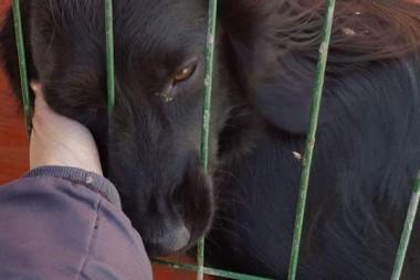 romanian rescue dogs