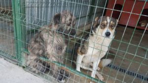 All You Need To Know About Romanian Rescue Dogs - These two stray puppies were just rescued and they refuse to stop hugging each other