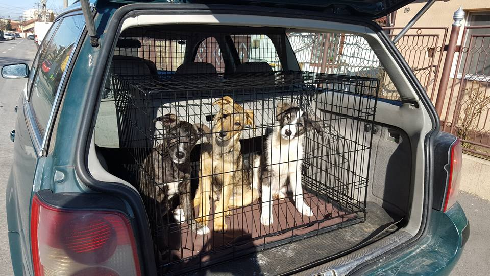 puppies leaving on transport