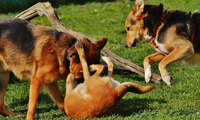 train your dog - dogs playing