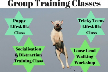 dog training classes worksop rotherham sheffield