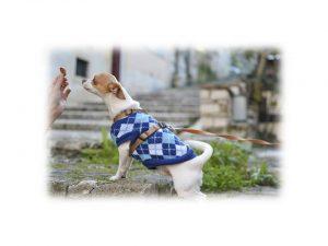 dog training plan
