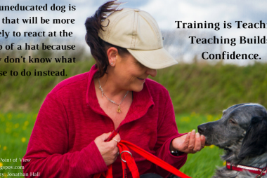 reactive dog training and support programme
