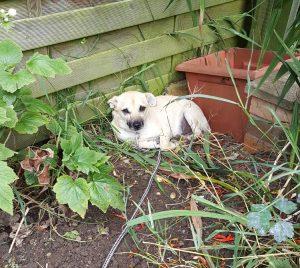 romanian rescue dogs advice