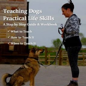 teaching dogs practical life skills