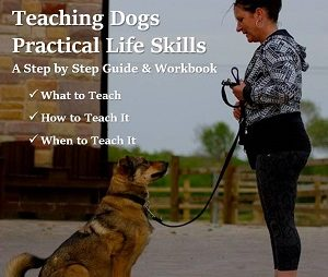 teaching dogs practical life skills