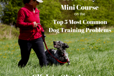 dog training problems - free mini course