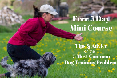 dog training problems - free e-course