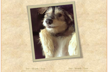 dog lovers diaries