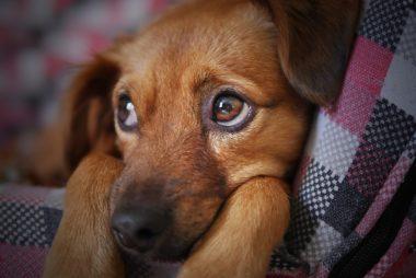 dogs behaviour