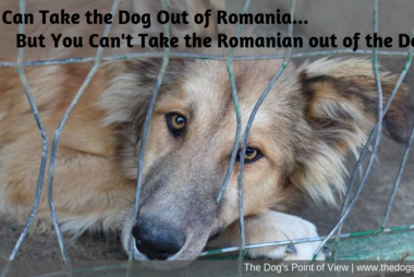 coaching group Romanian Rescue Dogs