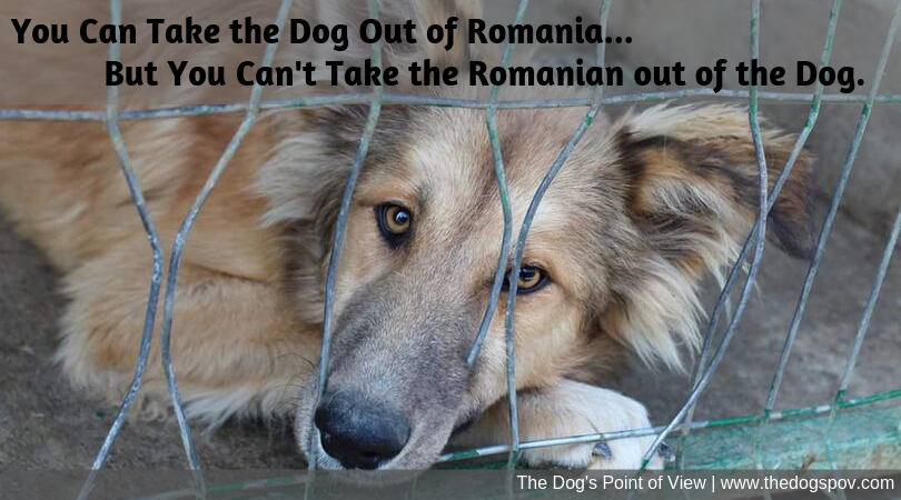 coaching group Romanian Rescue Dogs