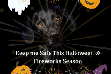 dogs halloween fireworks