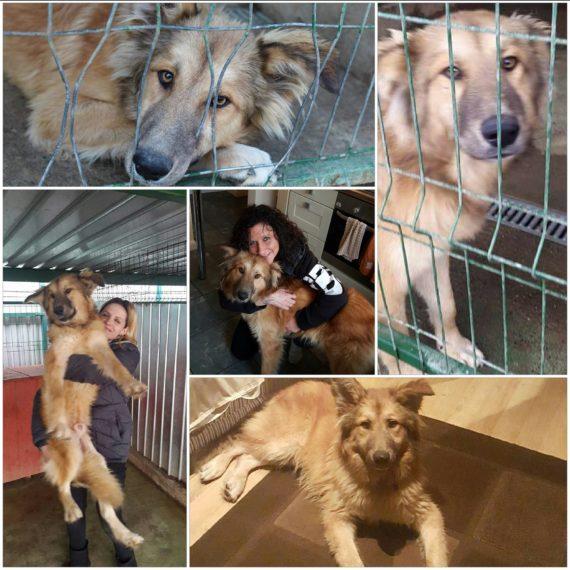 Romanian Rescue dogs seminars