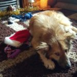 romanian dogs at christmas