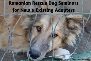 Romanian Rescue dogs seminars